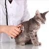 Ветеринарные клиники в Адамовке